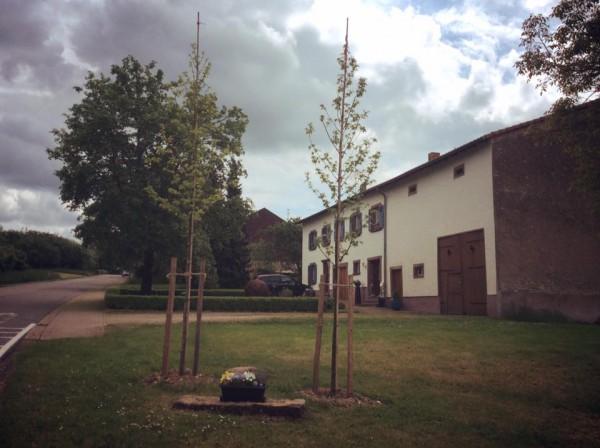 Sternbäume am Ortseingang